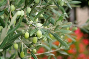 Ancient Italian Secret for Great Skin, Hair and Nails