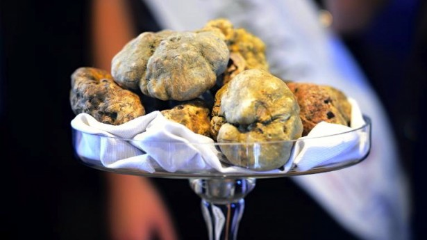 The Dark Side of the Truffle Trade