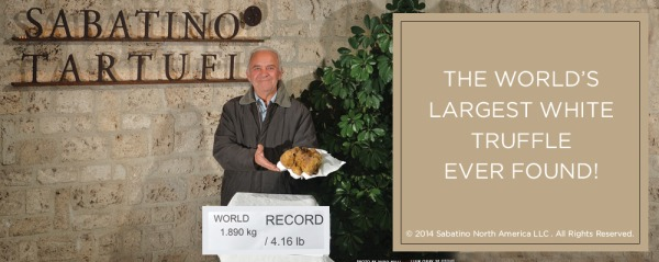 Largest White Truffle in History Discovered