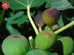 Figs Nutrition: Amazing Food With Loads of Benefits
