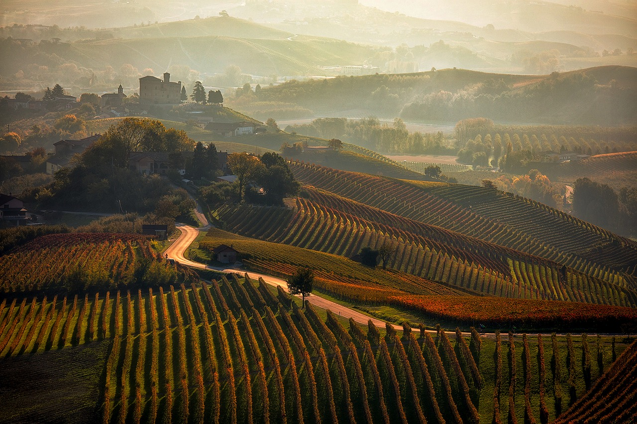 Autumn vineyard Langhe Barolo